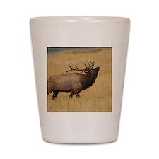 Bull Elk with Head Back Shot Glass
