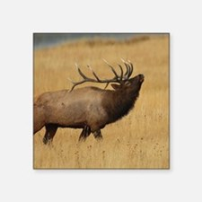 """Bull Elk with Head Back Square Sticker 3"""" x 3"""""""