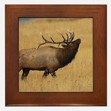 Bull Elk with Head Back Framed Tile
