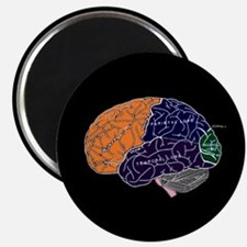 dr brain lrg d button Magnets