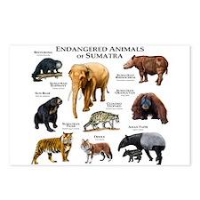 Endangered Animals of Sumatra Postcards (Package o