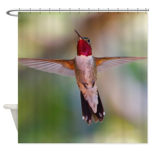Hummingbird Kitchen Curtains: Hummingbird In Flight Shower Curtain By ADMIN_CP16564703