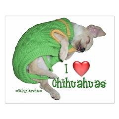 I Love Chihuahuas(Baby Porsha) Posters
