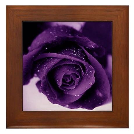 Purple Rose Framed Tile