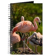Wild Pink Flamingo Journal