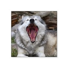 """wolf with mouth open Square Sticker 3"""" x 3"""""""