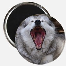wolf with mouth open Magnet
