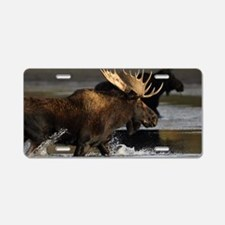 moose splashing in the wate Aluminum License Plate