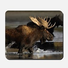 moose splashing in the water Mousepad