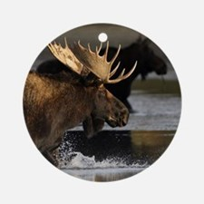 moose splashing in the water Round Ornament