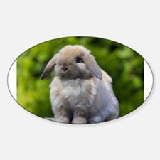 Cute Lop bunny Sticker (Oval)