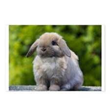 Cute Lop rabbit Postcards (Package of 8)