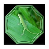 Anoles Drink Coasters