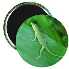 Green Lizard Magnet