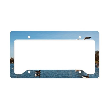 Ducks and Seagulls in Kensing License Plate Holder