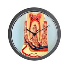 Tooth anatomy Wall Clock