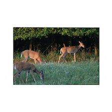 Grazing Deer Rectangle Magnet