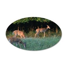 Grazing Deer 35x21 Oval Wall Decal