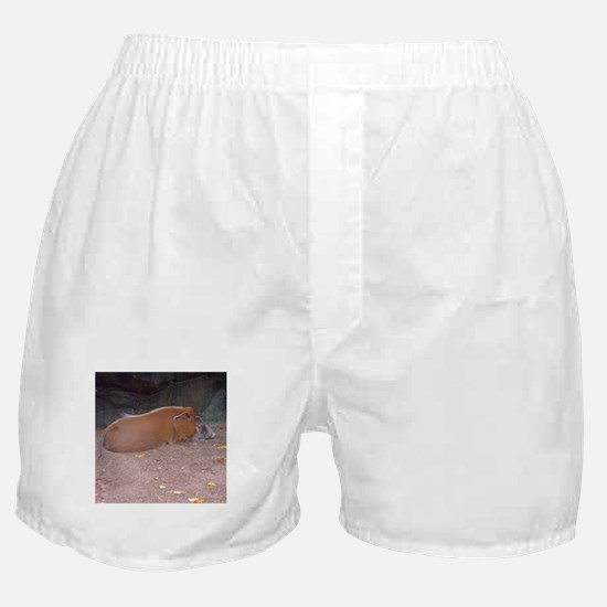 red river hog Boxer Shorts