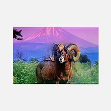 Big Horn Mount McLoughlin Rectangle Magnet