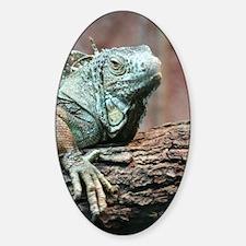 Green Iguana Decal