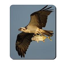 osprey fishing Mousepad