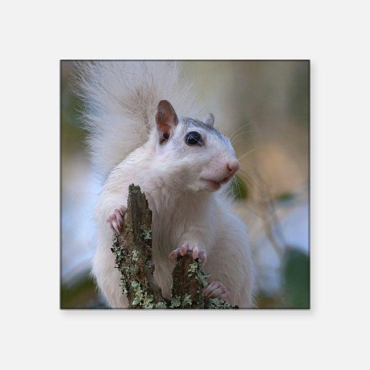 """Astronaut Squirrel Square Sticker 3"""" x 3"""""""