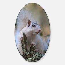Astronaut Squirrel Decal