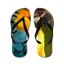 macaw, yellow and gold Flip Flops
