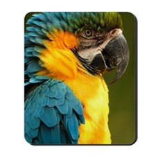 macaw, yellow and gold Mousepad