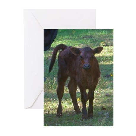 angus calf Greeting Cards (Pk of 10)