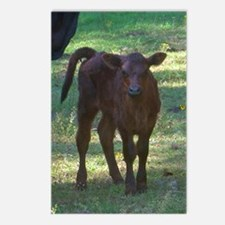 angus calf Postcards (Package of 8)