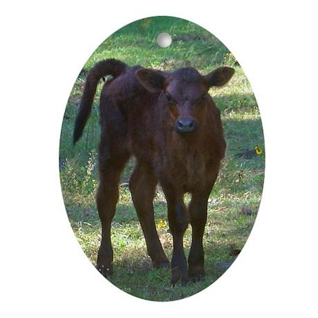 angus calf Oval Ornament