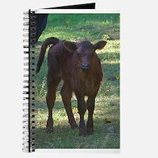 angus calf Journal
