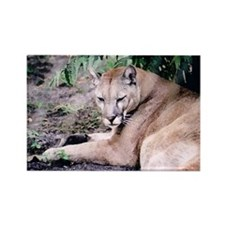 Cougar series 3 Rectangle Magnet