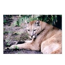 Cougar series 3 Postcards (Package of 8)