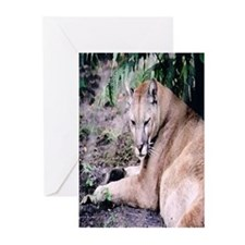 Cougar series 3 Greeting Cards (Pk of 10)