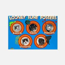 Looney Tune Fosters Magnets