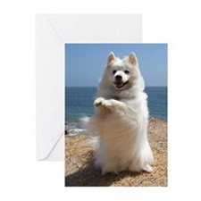 Stolli by the Sea Greeting Cards (Pk of 10)