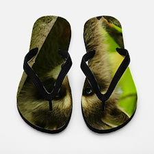 raccoon Flip Flops