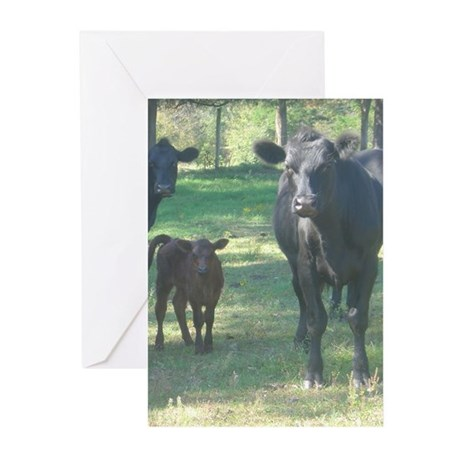 black angus Greeting Cards (Pk of 10)