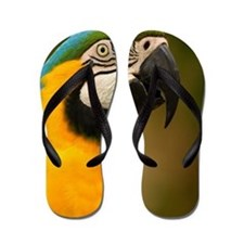 blue and gold macaw Flip Flops