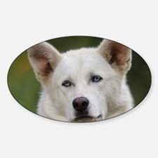 sled dog Sticker (Oval)