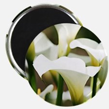 White Calla Lilies Magnets