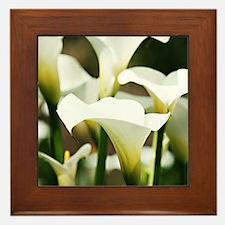 White Calla Lilies Framed Tile