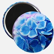 Blue Hydrangeas Magnets
