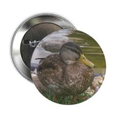 """the duck 2.25"""" Button"""