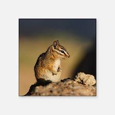"chipmunk Square Sticker 3"" x 3"""