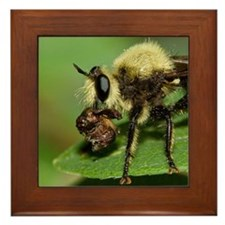 Robber Fly with Lunch Framed Tile