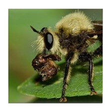 Robber Fly with Lunch Tile Coaster